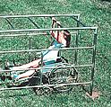 special needs playground equipment :: structures :: ada wheel-thru arcade/ ADA Sports Equipment